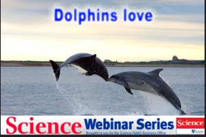 Dolphinslovescience